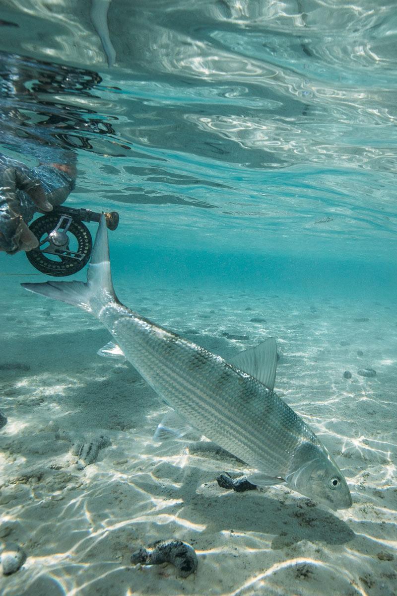 tahiti_fly_fishing_12